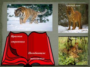 Красные страницы Погибающие животные Леопард Красный волк Амурский тигр