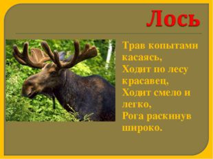 Трав копытами касаясь, Ходит по лесу красавец, Ходит смело и легко, Рога р