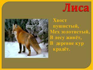 Хвост пушистый, Мех золотистый, В лесу живёт,  В деревне кур крадёт.