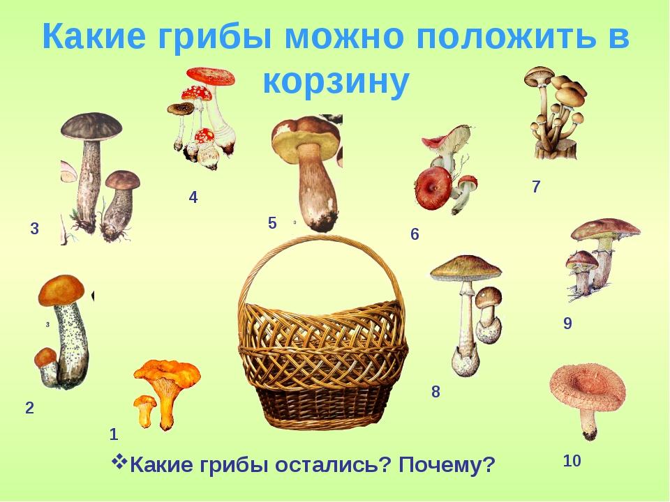 беден беда, задания про грибы в картинках такие незатейливые