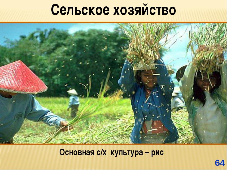 * Сельское хозяйство Основная с/х культура – рис