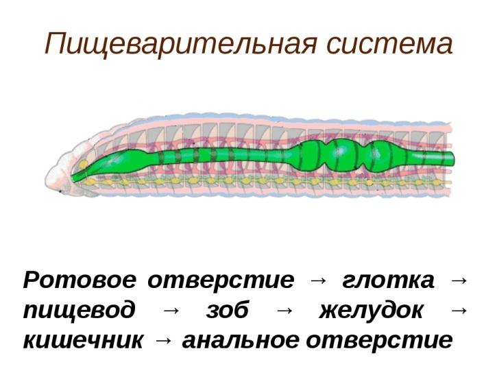 http://fs00.infourok.ru/images/doc/153/177437/img13.jpg