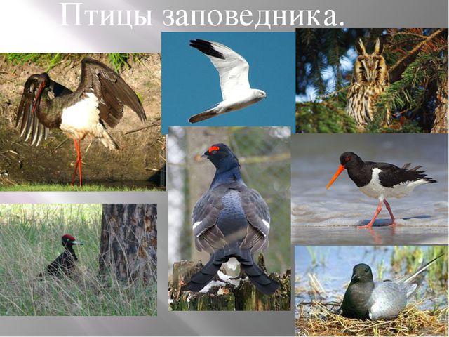 Птицы заповедника.