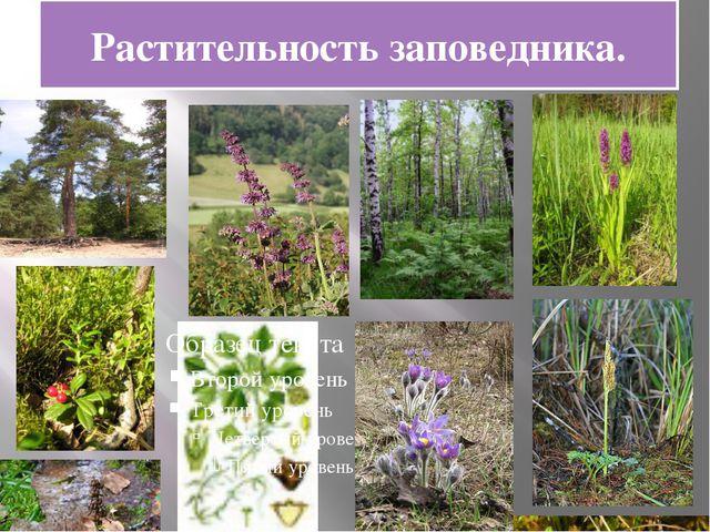 Растительность заповедника.