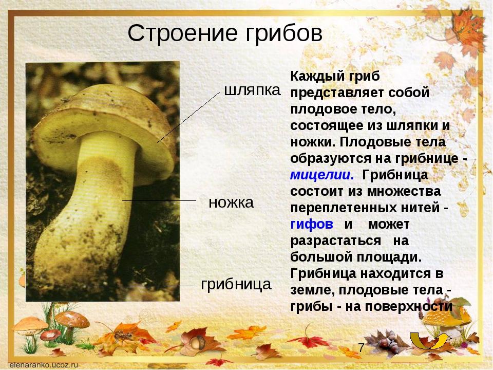 Строение грибов Каждый гриб представляет собой плодовое тело, состоящее из шл...