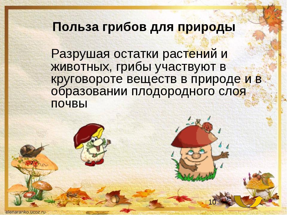 Польза грибов для природы Разрушая остатки растений и животных, грибы участв...