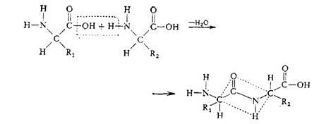 http://www.teharenda.com/biochem/text.files/image056.jpg