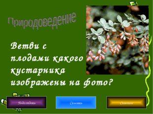 Ветви с плодами какого кустарника изображены на фото? Подглядеть Списать Спас