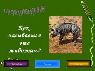 Подглядеть Списать Спасение Как называется это животное?