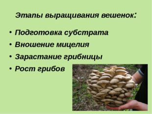Этапы выращивания вешенок: Подготовка субстрата Вношение мицелия Зарастание г