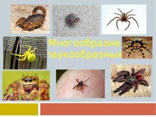 Многообразие паукообразных