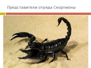 Представители отряда Скорпионы Это прямые потомки первых членистоногих – водя