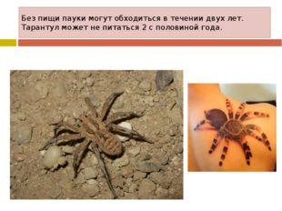 Без пищи пауки могут обходиться в течении двух лет. Тарантул может не питатьс