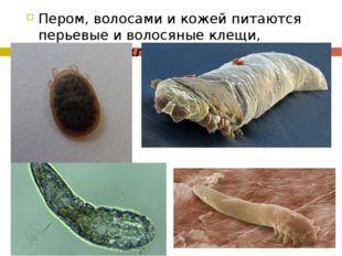 Пером, волосами и кожей питаются перьевые и волосяные клещи, подкожный клещ-д