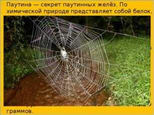 Паутина — секрет паутинных желёз. По химической природе представляет собой бе