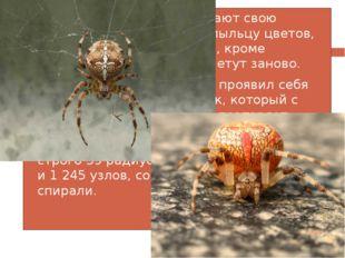 Большинство пауков съедают свою старую паутину, а также пыльцу цветов, котора