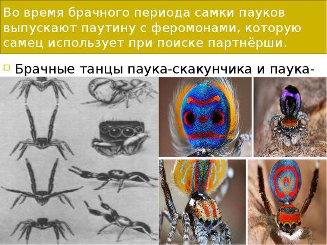 Во время брачного периода самки пауков выпускают паутину с феромонами, котору...