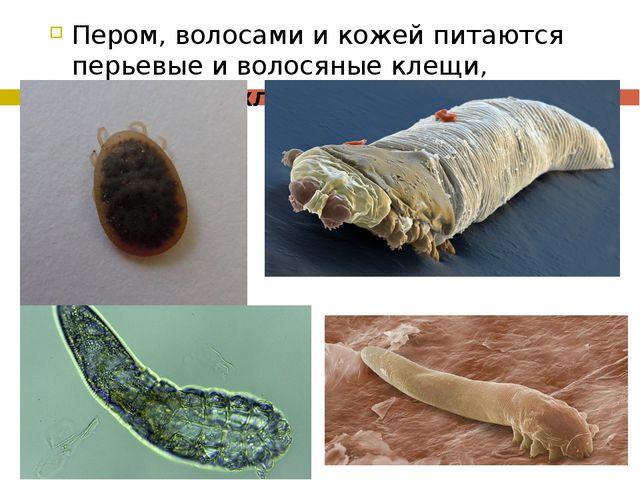 Пером, волосами и кожей питаются перьевые и волосяные клещи, подкожный клещ-д...