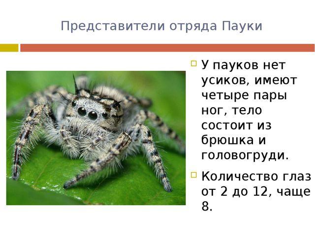 Представители отряда Пауки У пауков нет усиков, имеют четыре пары ног, тело с...