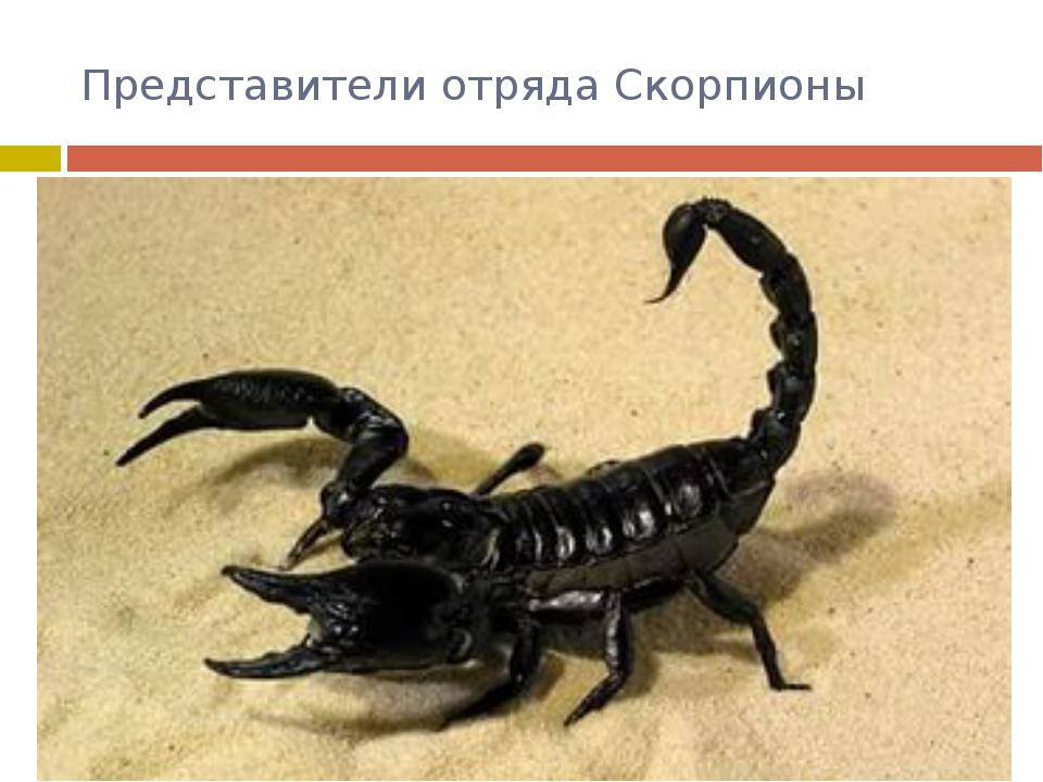 Представители отряда Скорпионы Это прямые потомки первых членистоногих – водя...