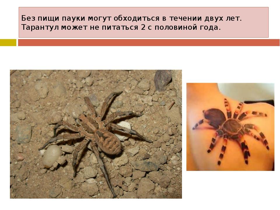Без пищи пауки могут обходиться в течении двух лет. Тарантул может не питатьс...