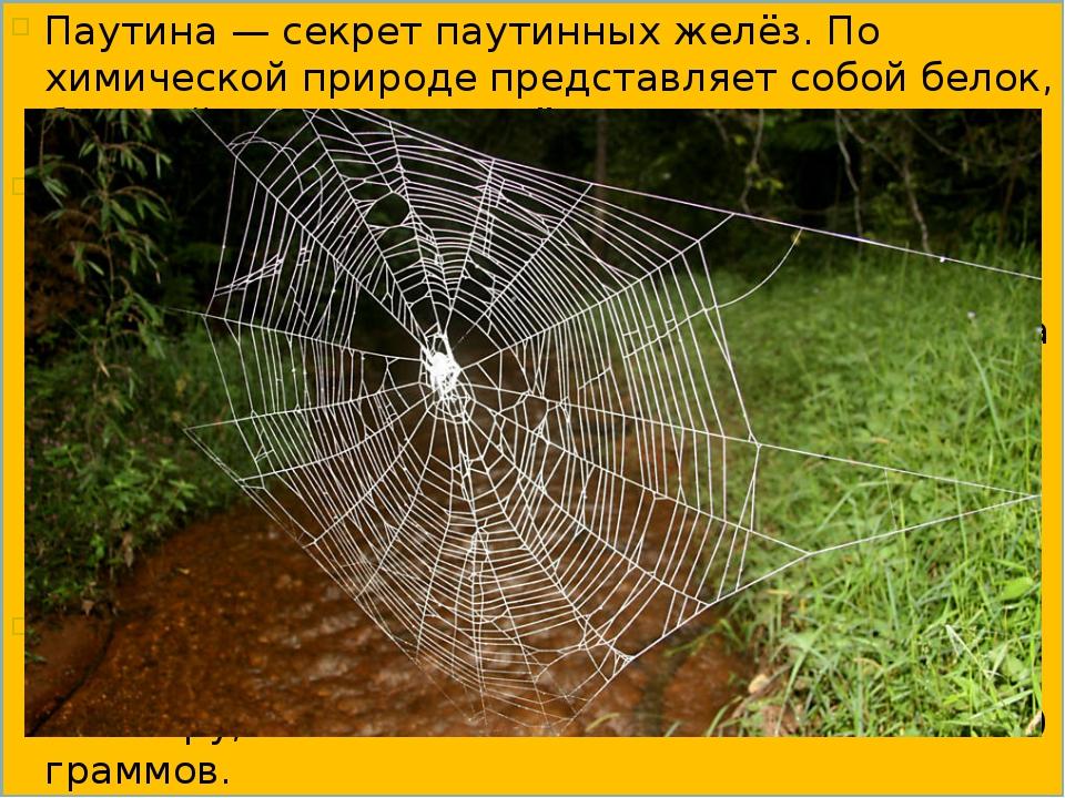 Паутина — секрет паутинных желёз. По химической природе представляет собой бе...