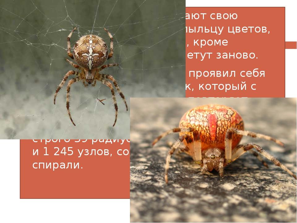 Большинство пауков съедают свою старую паутину, а также пыльцу цветов, котора...