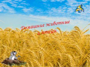 Домашние животные и птицы Дунаева Н.М.