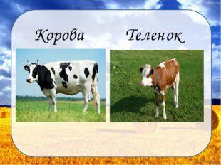 Корова Теленок Дунаева Н.М.