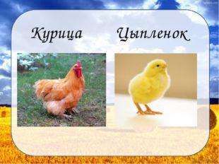 Курица Цыпленок Дунаева Н.М.