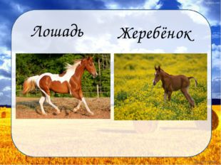 Лошадь Жеребёнок Дунаева Н.М.