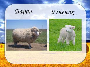 Баран Ягнёнок Дунаева Н.М.