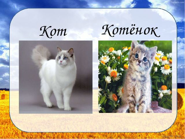 Кот Котёнок Дунаева Н.М.