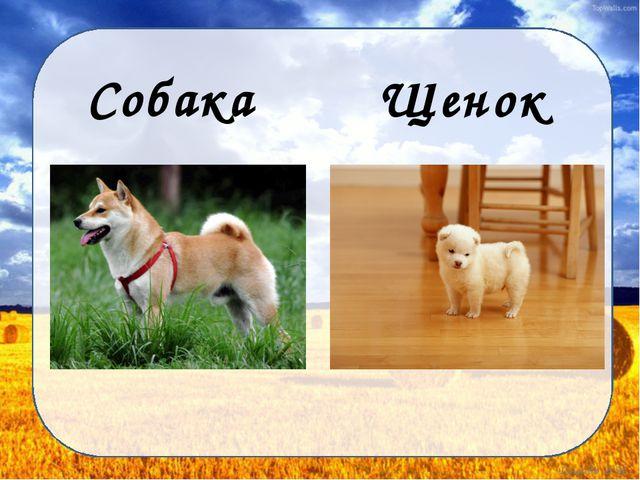 Собака Щенок Дунаева Н.М.