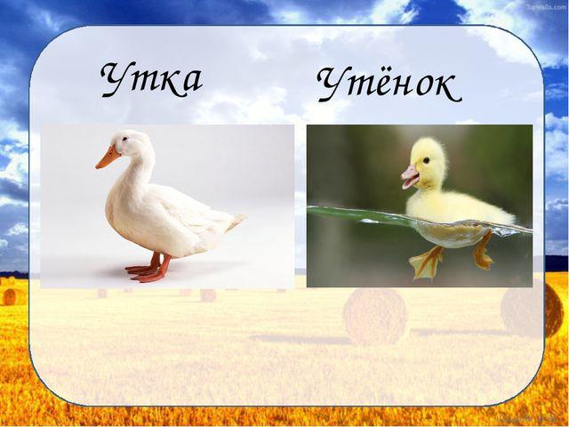 Утка Утёнок Дунаева Н.М.