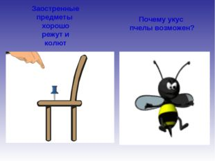 Заостренные предметы хорошо режут и колют Почему укус пчелы возможен?