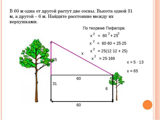 В 60 м одна от другой растут две сосны. Высота одной 31 м, а другой – 6 м. На...