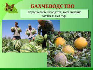 БАХЧЕВОДСТВО Отрасль растениеводства; выращивание бахчевых культур.
