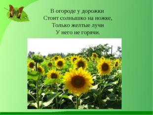 В огороде у дорожки Стоит солнышко на ножке, Только желтые лучи У него не гор