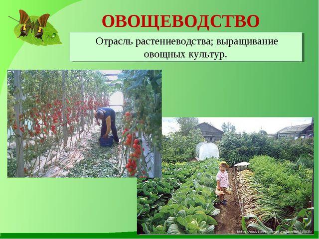 ОВОЩЕВОДСТВО Отрасль растениеводства; выращивание овощных культур.