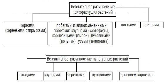 D:\Documents and Settings\Admin\Рабочий стол\konspekt.jpg