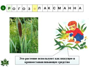 Это растение используют как вяжущее и кровоостанавливающее средство 1