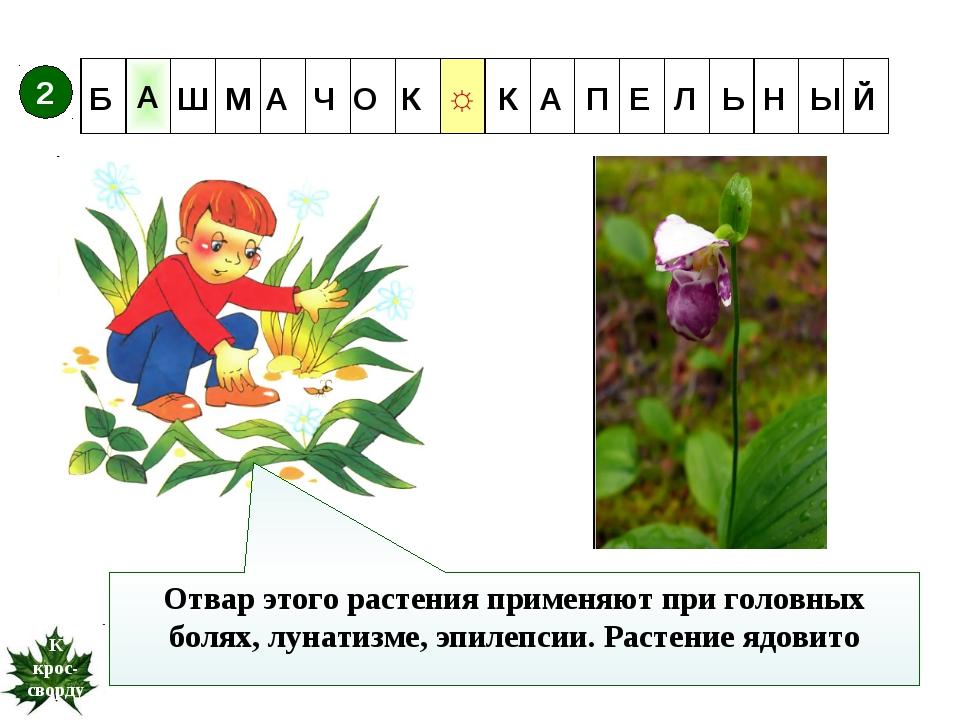 Отвар этого растения применяют при головных болях, лунатизме, эпилепсии. Раст...