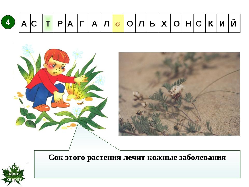 ☼ Т 4 Сок этого растения лечит кожные заболевания