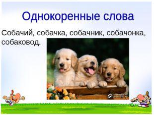 Собачий, собачка, собачник, собачонка, собаковод.