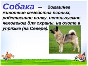 домашнее животное семейства псовых, родственное волку, используемое человеко