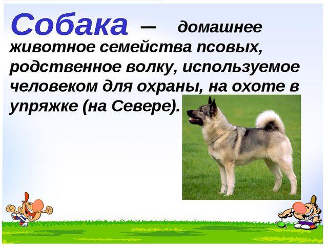 домашнее животное семейства псовых, родственное волку, используемое человеко...