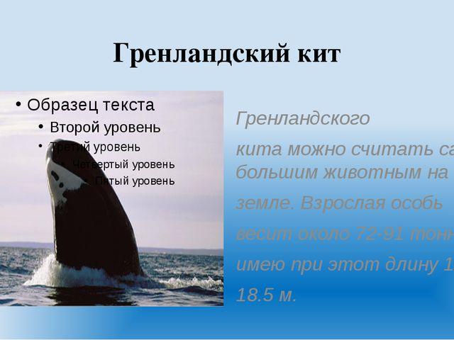 Гренландский кит Гренландского кита можно считать самым большим животным на з...