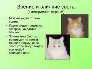 Зрение и влияние света (эксперимент первый) Мой кот видит только прямо. Плохо