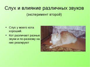 Слух и влияние различных звуков (эксперимент второй) Слух у моего кота хороши